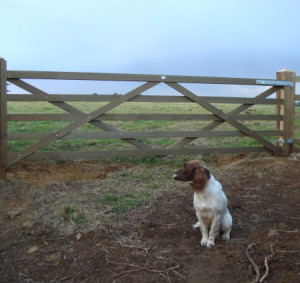 Dog and gate in field