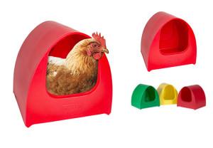 Hen inside poultry palace