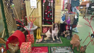 Spaniel surrounded by Christmas gifts