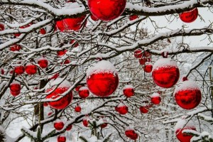 Red baubles covered in snow on tree branches