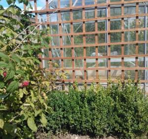 Trellis garden fencing