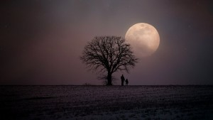Moonlit snow scene