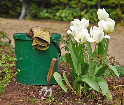Garden with tulips, trowel and gloves