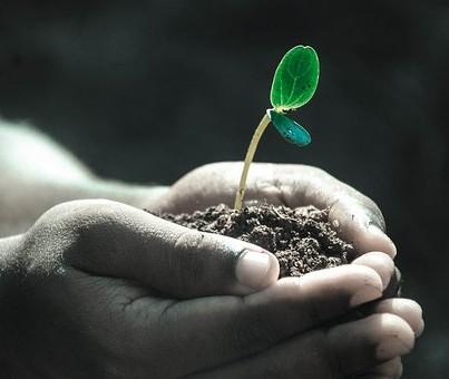 hands holding seedling in soil