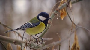 Blue tit on branch in autumn