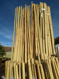 Bamboo canes against blue sky