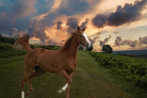 Chestnut horse in field at sunset