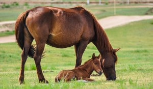 Mare and foal in field