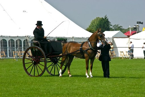 Horse and carriage on field