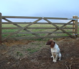 Diamond braced gate