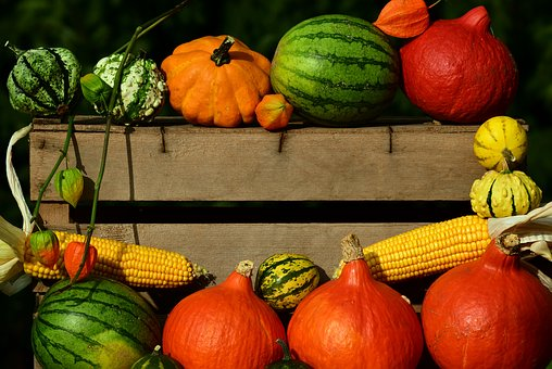 array of pumpkins outdoors