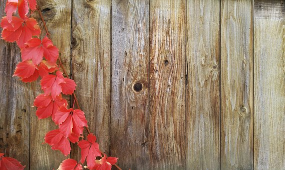 Wooden fence with red autumn leaves