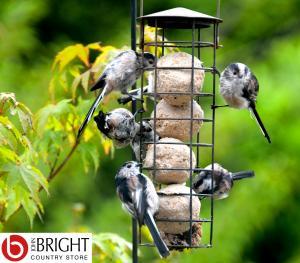 Bird feeders fat balls instagram