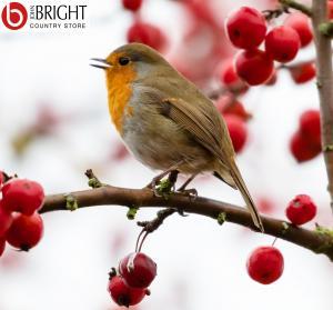 Bird food instagram