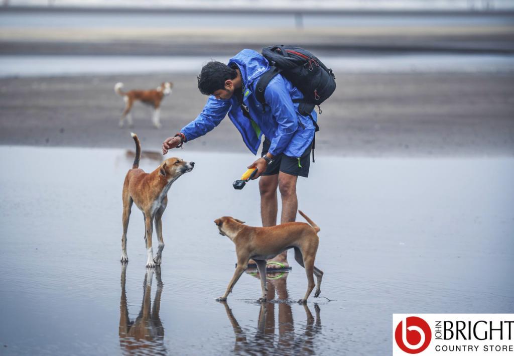Dogs Facebook