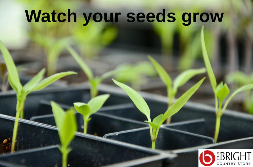 Watch your seeds grow