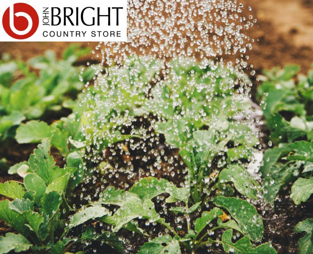seeds watering
